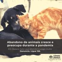 Abandono de animais cresce e preocupa durante a pandemia